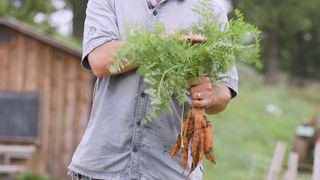 Are Carrots Healthy?