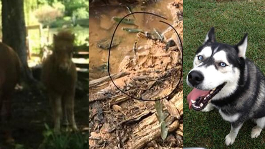 mystery surrounding kentucky animal killings continues