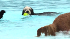 Nashville Shores Goes To The Dogs This Weekend