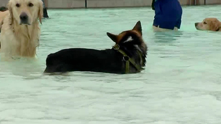 Pups Enjoy Dog-Only Swim Day At Nashville Shores