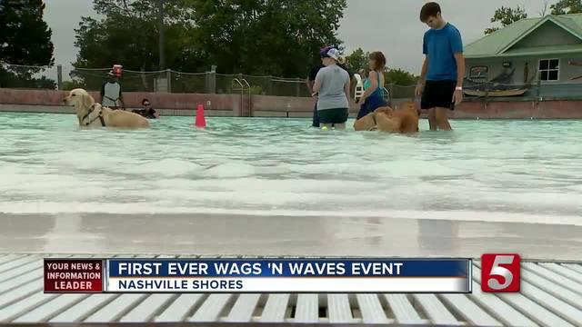 Pups Enjoy Dog-Only Swim Day At Nashville Shores